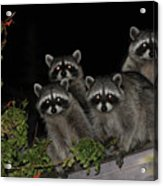 Party Of Five On The Roof Top Acrylic Print