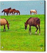 Paso Fino Horses Graze By Seaside Acrylic Print
