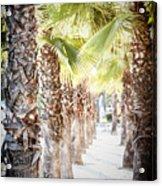 Pass Of Palms Acrylic Print