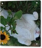 Passed Out Under The Daisies Acrylic Print