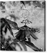 Passion Flower Black And White Acrylic Print