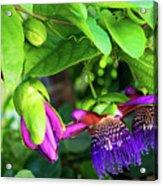 Passion Flower Ver. 18 Acrylic Print