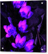 Passionate Blooms Acrylic Print