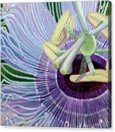 Passionflower Vine Acrylic Print