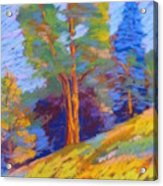 Pastel Class Demo Acrylic Print