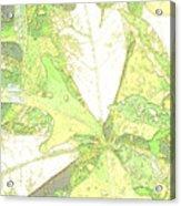 Pastel Green Nature Acrylic Print