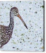 Pastel Limpkin Acrylic Print
