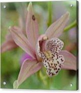 Pastel Orchid Acrylic Print