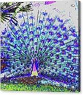 Pastel Peacock Acrylic Print