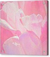 Pastel Pink Petals Acrylic Print