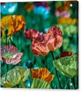 Pastel Poppies On Blue Haze Acrylic Print