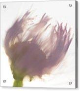 Pastel Purple Flower Acrylic Print