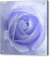 Pastel Purple Rose Flower Acrylic Print by Jennie Marie Schell