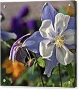 Pastel Spring Flowers Acrylic Print