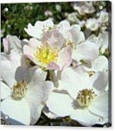 Pastel White Yellow Pink Roses Garden Art Prints Baslee Acrylic Print