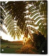 Pasture at Sunrise Acrylic Print