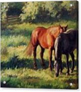 Pasture At Whites Crossing      Horse Painting Acrylic Print