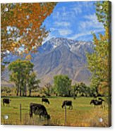 Pasture With A View Acrylic Print