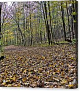 Path Home - Kettle Moraine 10-14-16 Acrylic Print