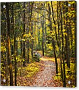 Path In Fall Forest Acrylic Print