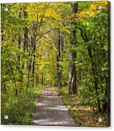 Path In The Woods During Fall Leaf Season Acrylic Print