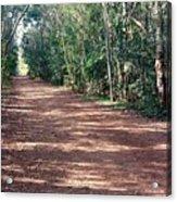 Path Into The Jungle Acrylic Print