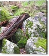 Path Not Taken Acrylic Print