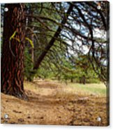 Path Of Enlightenment Acrylic Print