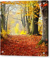 Path Of Red Leaves Towards Light In Fall Forest Acrylic Print