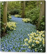 Path Of The Beautiful Spring Flowers Acrylic Print