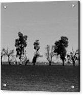 Path Of Trees On Farm Acrylic Print