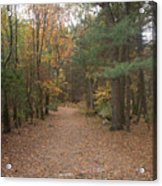 Path On Wilsons Mountain Acrylic Print