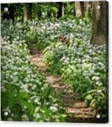 Path Through A Deciduous Forest, Wild Garlic Acrylic Print