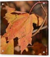 Path Through A Leaf Acrylic Print