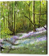 Path Through Bluebell Wood Acrylic Print