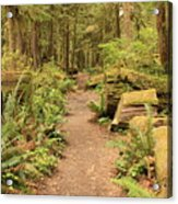 Path Through Mossy Forest Acrylic Print