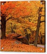 Path Through New England Fall Foliage Acrylic Print