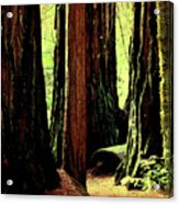 Path Through The Forest Edge . 7d5432 Acrylic Print