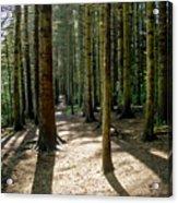 Path Through The Woods. Acrylic Print