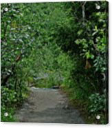 Path To Adventure Acrylic Print