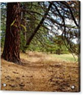 Path To Enlightenment 1 Acrylic Print