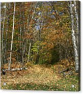 Path To Joiner Brook Acrylic Print