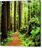 Path To Peace Acrylic Print