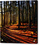 Path To Serenity - Nickerson State Park Acrylic Print