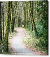 Path To The Forest Acrylic Print