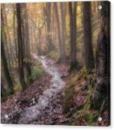 Path Trough The Woods Acrylic Print