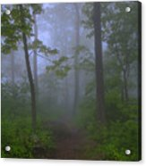 Pathway Through The Fog Acrylic Print