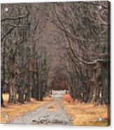Pathway Through The Trees Acrylic Print