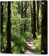 Pathway Through The Woods Acrylic Print