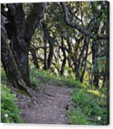 Pathways Acrylic Print
